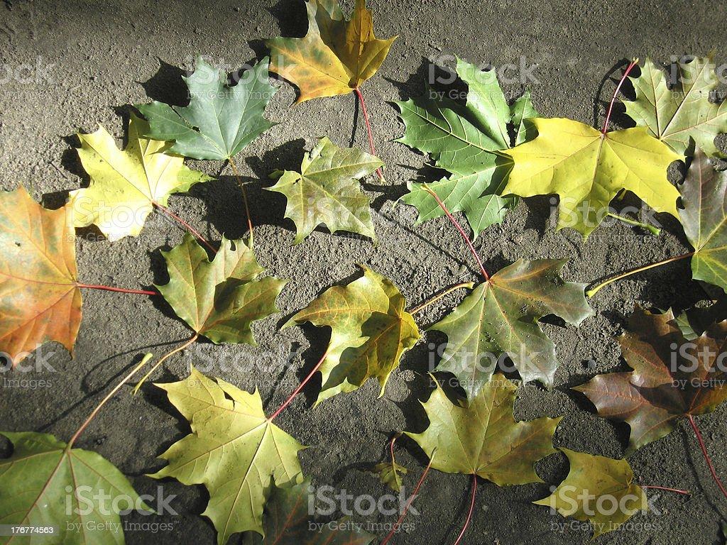 Yellow leaf autumn royalty-free stock photo