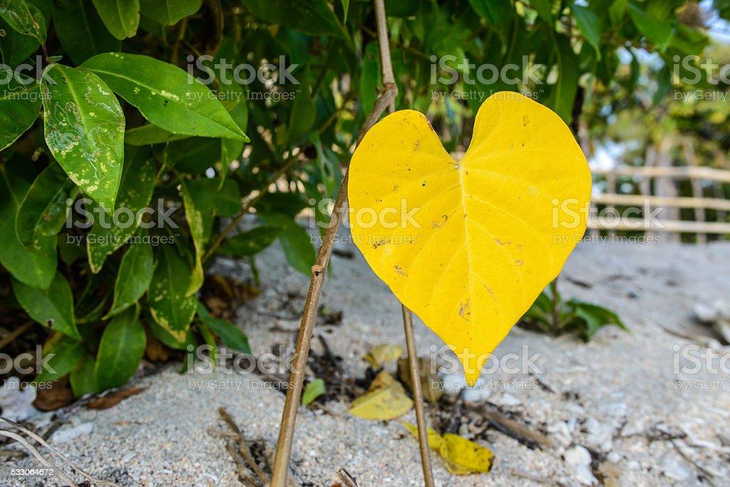 yellow leaf looking like a heart closeup stock photo