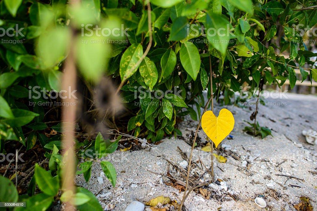 yellow leaf looking like a heart - foto de stock
