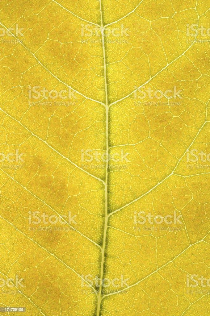 Yellow leaf macro royalty-free stock photo
