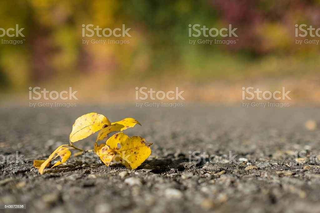 Yellow leaf on a road stock photo