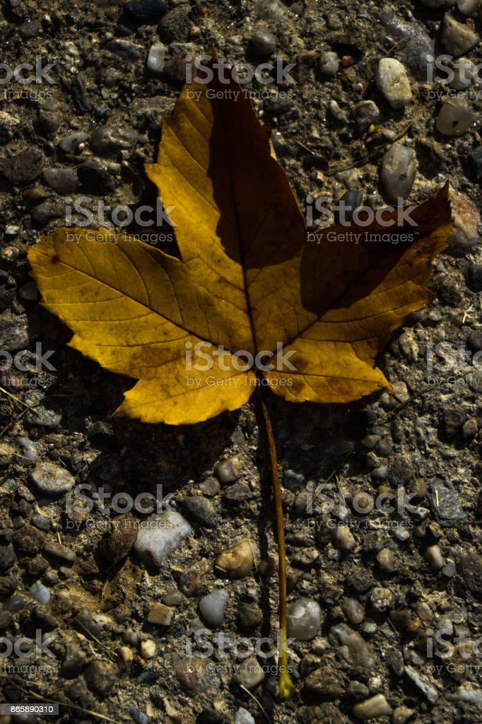A yellow leaf on concrete stock photo