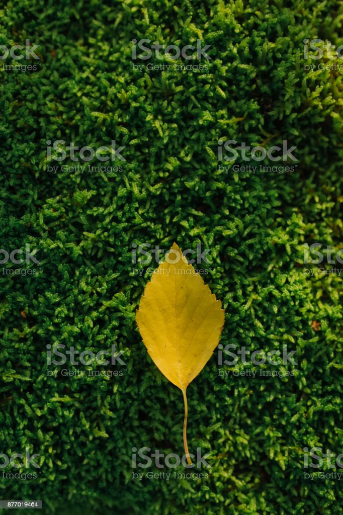 Yellow leaf on green moss stock photo