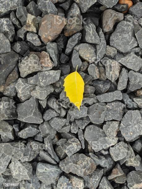 Photo of Yellow Leaf on hard grey rock