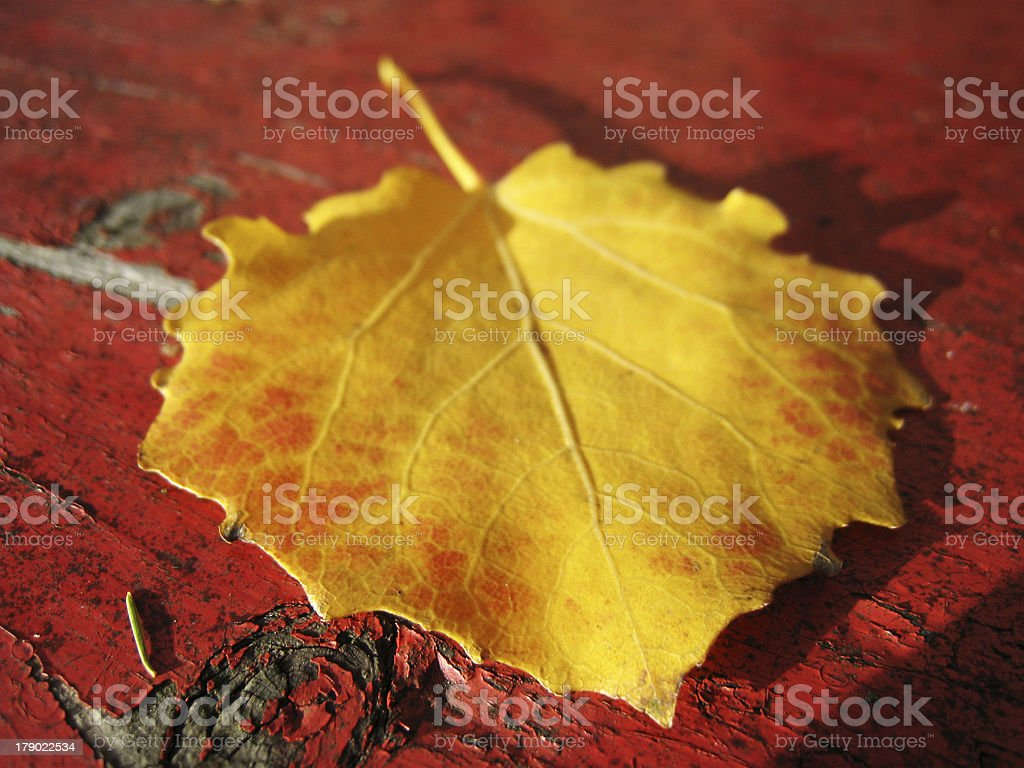 yellow leaf on red bench with tiny depth of field royalty-free stock photo