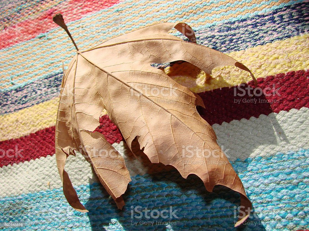 Yellow leaf on rug bacground closeup stock photo