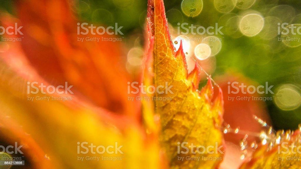 Yellow leaf on shiny blurred background. Macro royalty-free stock photo