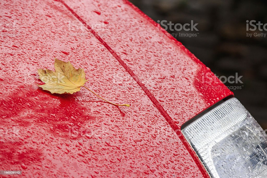 yellow leaf on the wet red car hood royalty-free stock photo