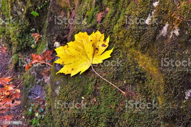 Photo of Yellow leaf