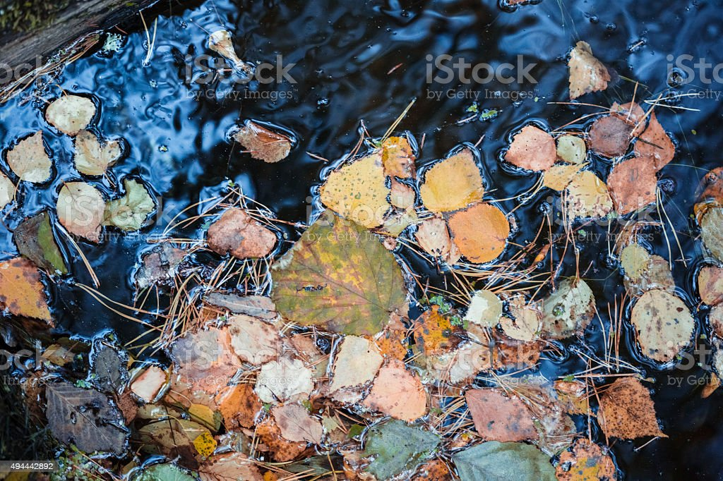 yellow leafs in the lake stock photo