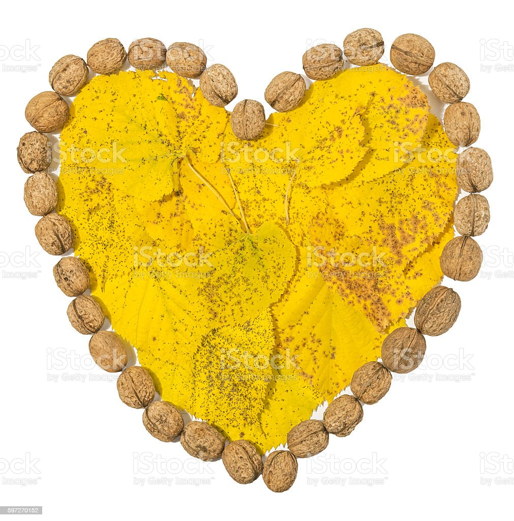 Yellow leaves and several walnuts shaped hart on white Lizenzfreies stock-foto