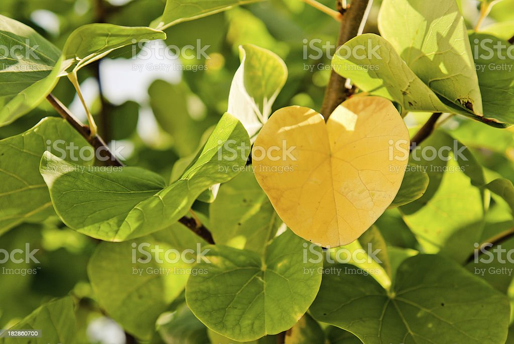 yellow leaves for the autumn arrive royalty-free stock photo