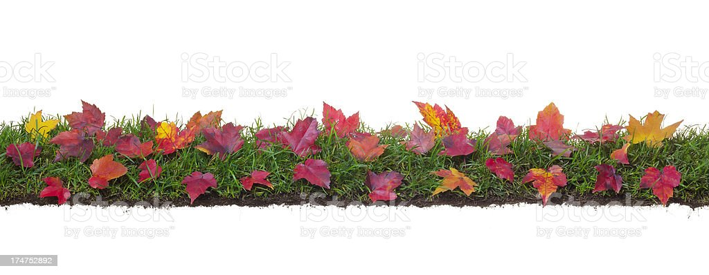 Yellow leaves on grass and roots royalty-free stock photo