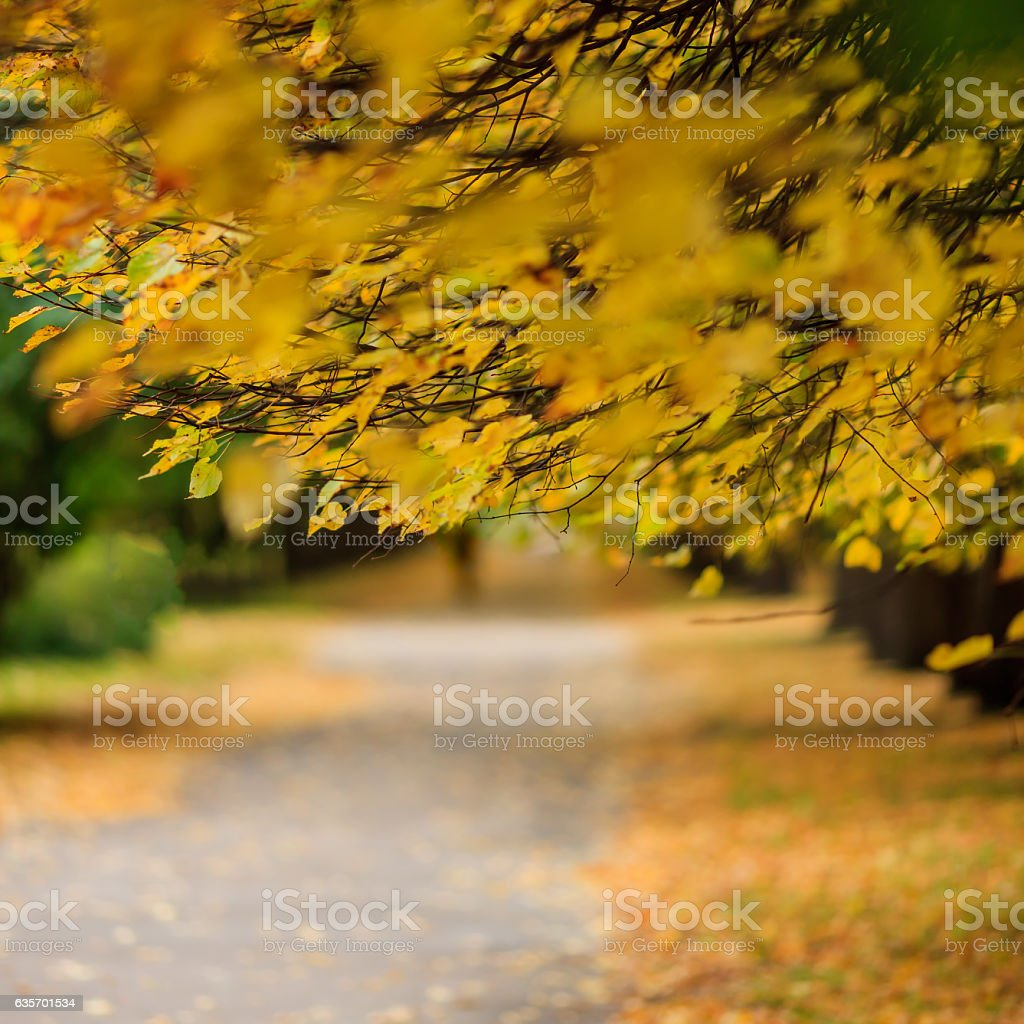 Yellow leaves on the branches in a park. royalty-free stock photo