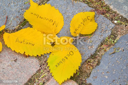 istock yellow leaves with inscriptions: autums, september, october, november 1020037706