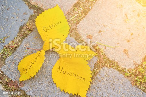 istock yellow leaves with inscriptions: autums, september, october, november 1020041208