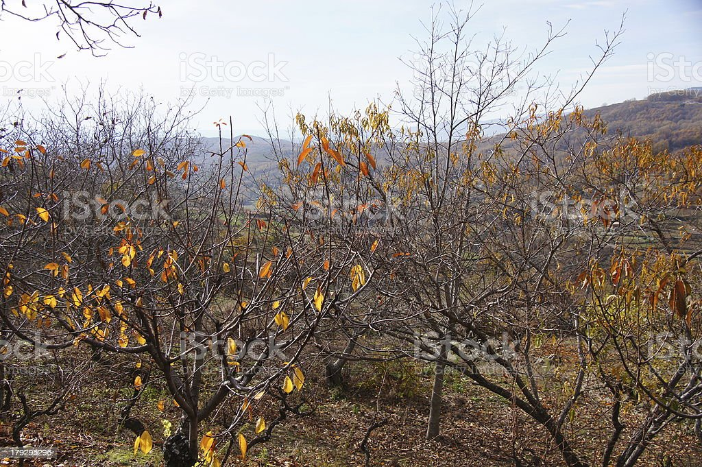 Yellow leaves with landscape to fund royalty-free stock photo