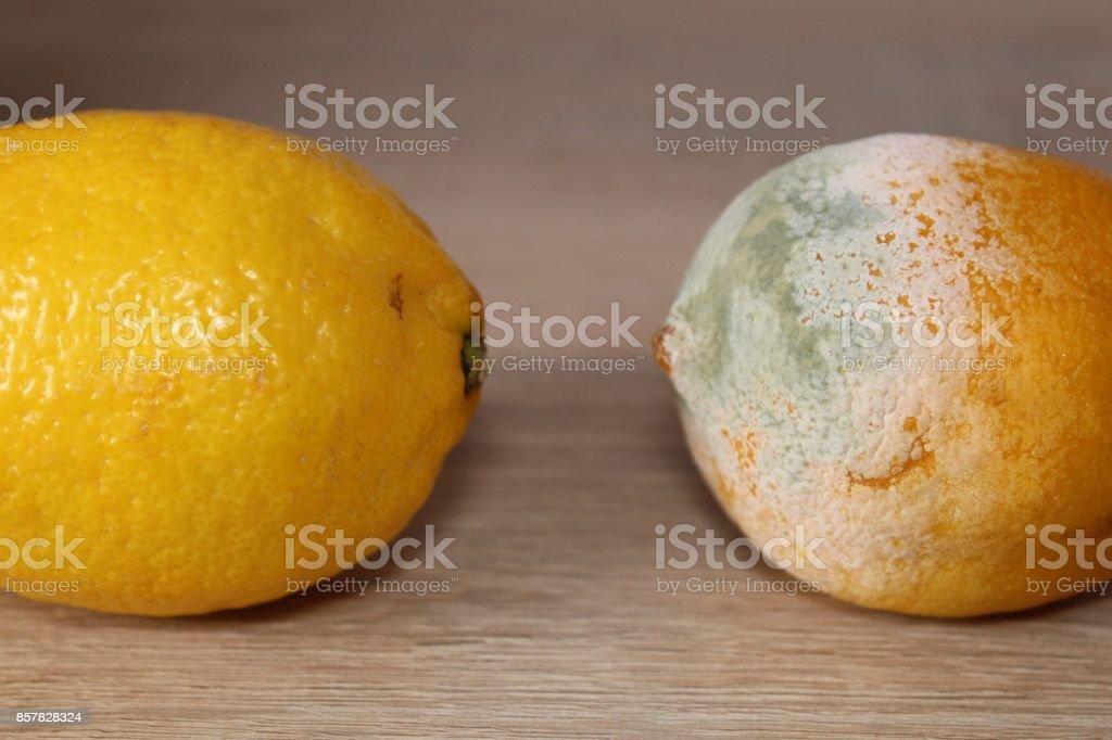 Yellow lemon vs molden lemon. stock photo