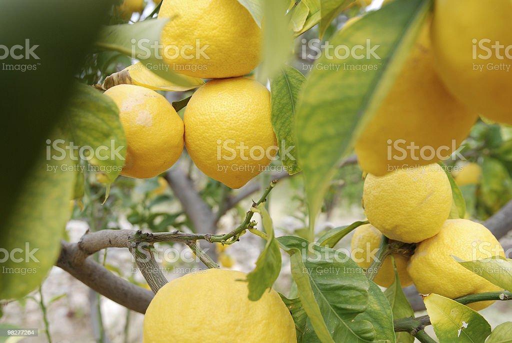 노란색 레몬 royalty-free 스톡 사진