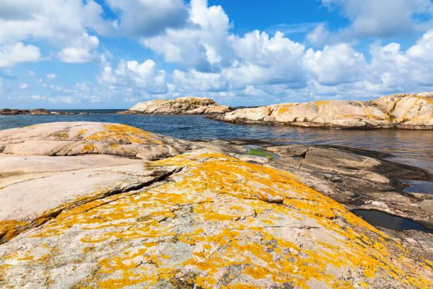 gula lavar på klipporna vid havet - bohuslän nature bildbanksfoton och bilder