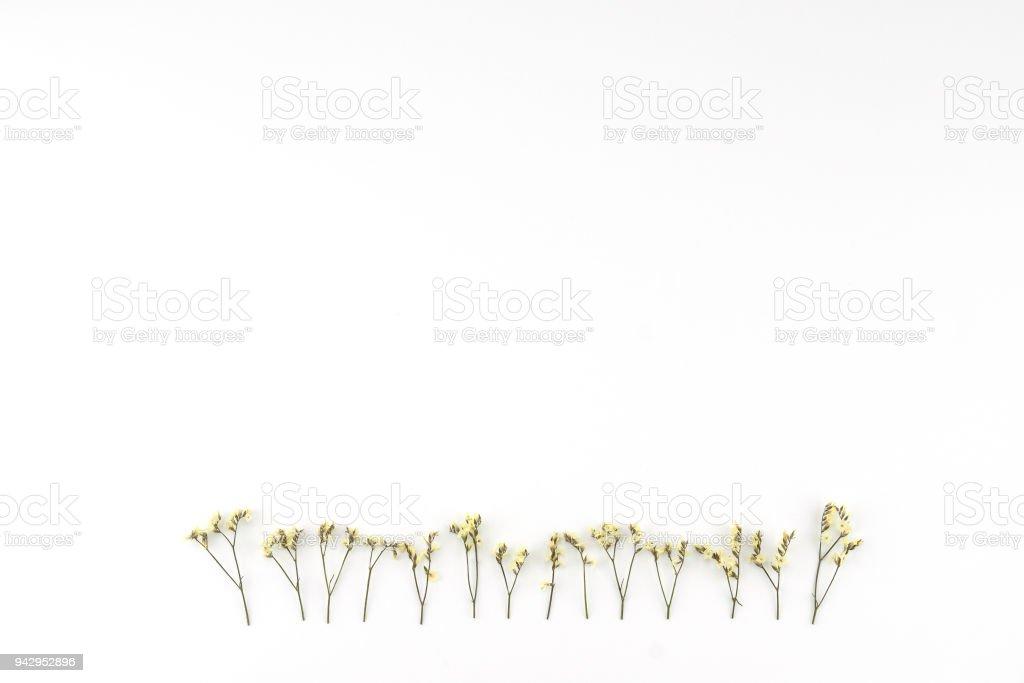 Yellow limonium caspia flowers on white background stock photo