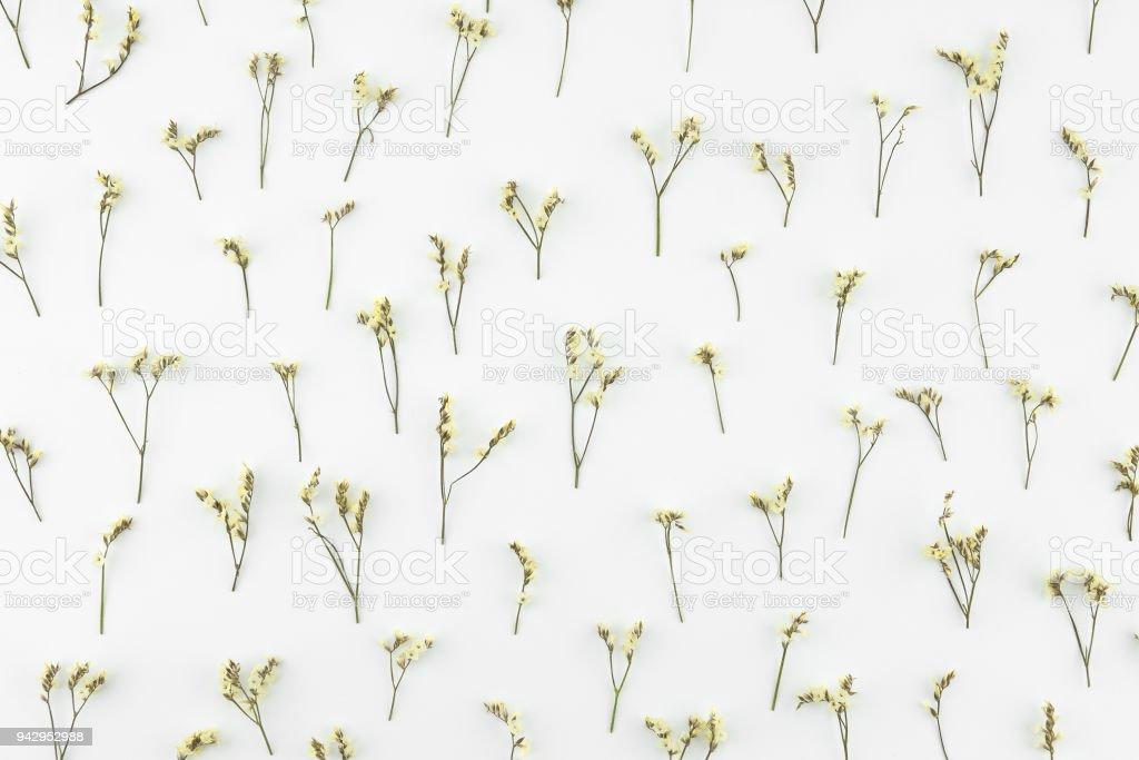 Yellow limonium caspia flowers pattern on white background stock photo