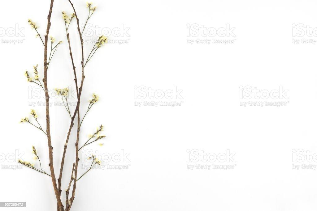 Yellow limonium caspia flowers with brown branch stock photo