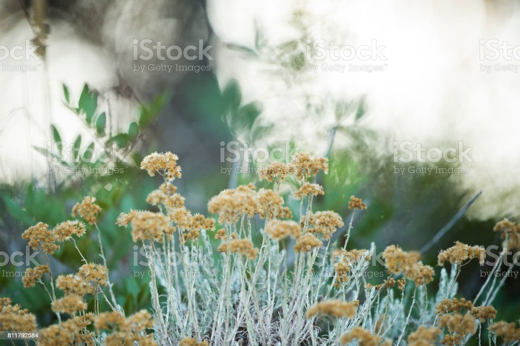 Yellow little flowers on a blurred background stock photo