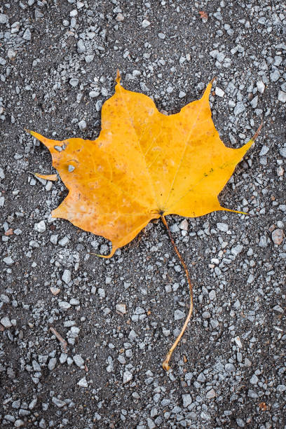 Yellow lonely leaf on the road – zdjęcie