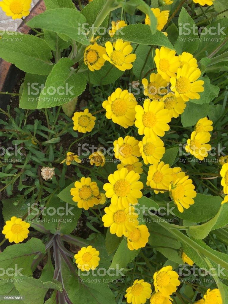 yellow lyric - Royalty-free Close-up Stock Photo