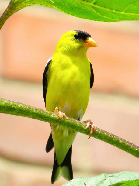Tweety Bird Stock Photos, Pictures & Royalty-Free Images