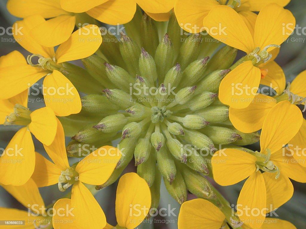Yellow Mandala royalty-free stock photo
