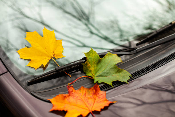 Yellow maple leaf on a car glass stock photo