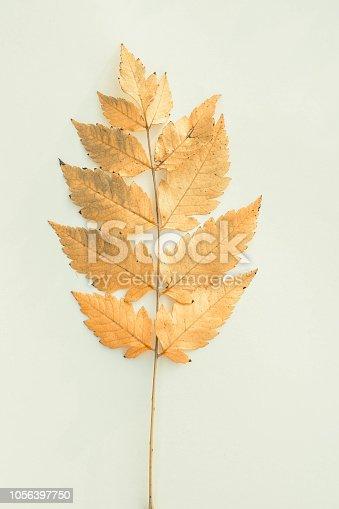 Autumn Leaf Color, Autumn, Plant, Season