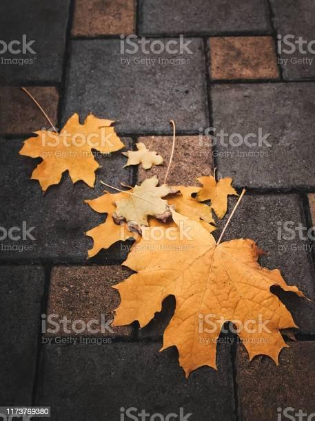 Photo of yellow maple leaf on asphalt close-up