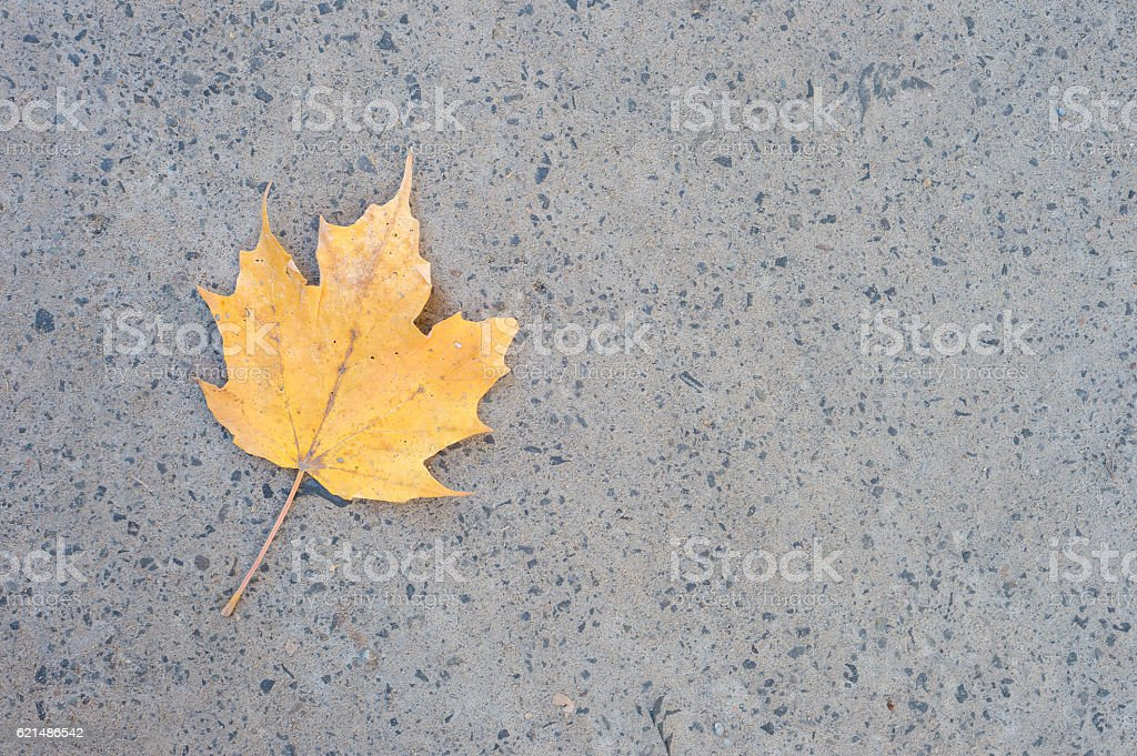 Yellow Maple leaf on the ground Lizenzfreies stock-foto