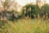 Yellow meadow grass. Macro. Summer concept. Selective focus. Plants, flowers. Copy space.