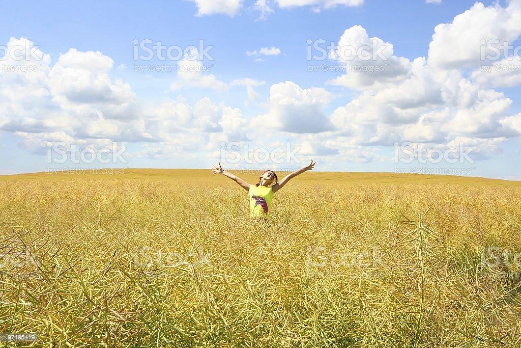yellow meadow royalty-free stock photo