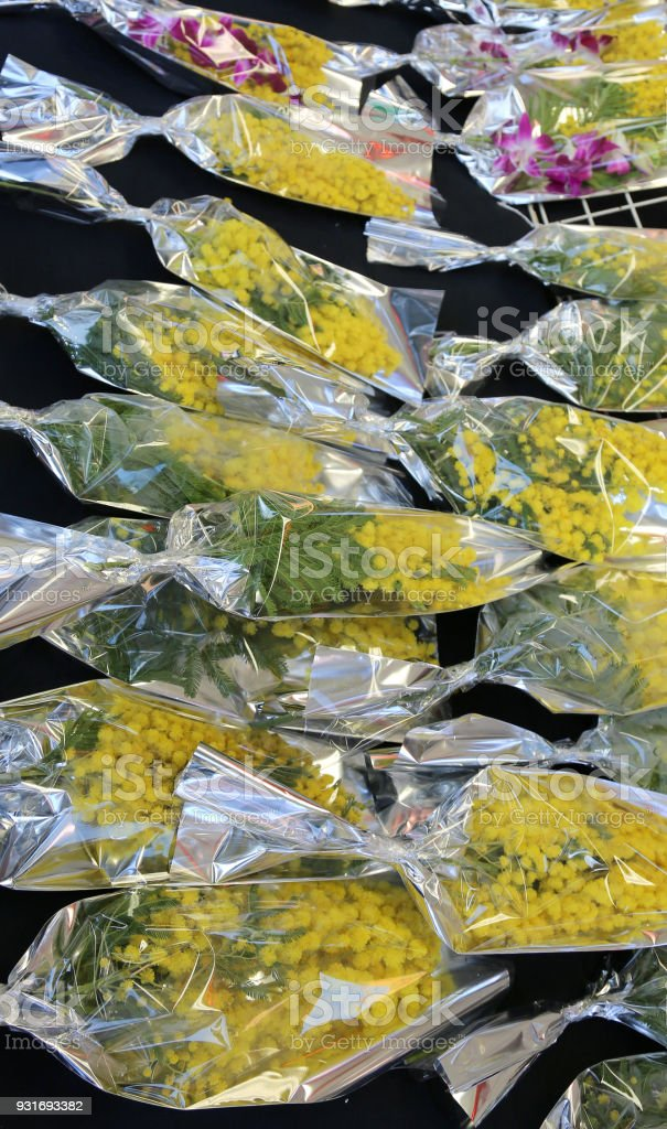 yellow mimosa for all women during the Womens Day stock photo