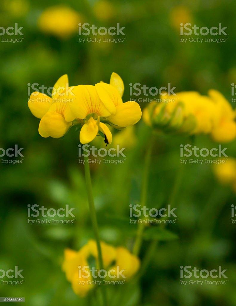 Yellow mood royalty-free stock photo