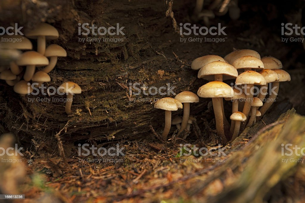 Yellow mushroom in the forest stock photo