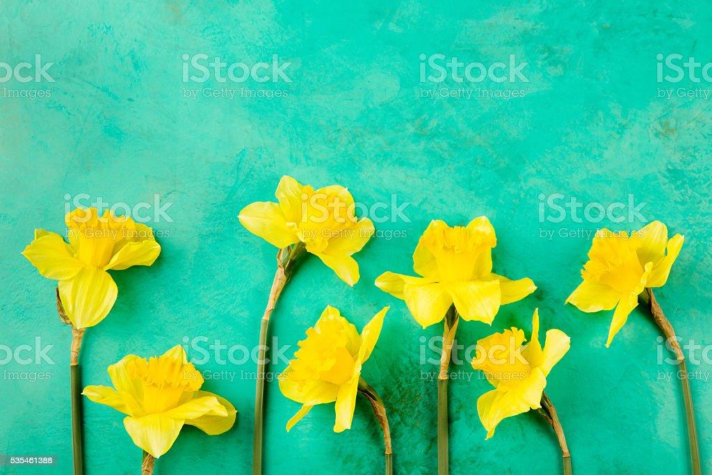 Giallo Narciso Fiori Su Sfondo Blu Fotografie Stock E Altre