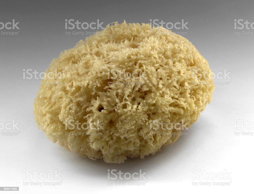 yellow natural sponge stock photo