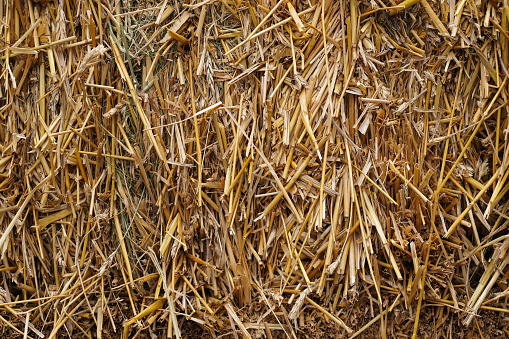 Yellow natural Straw as background. Nature concept.