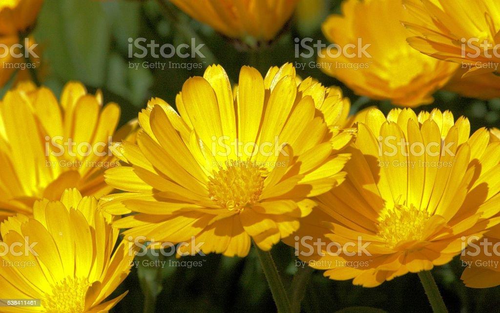 yellow nature stock photo
