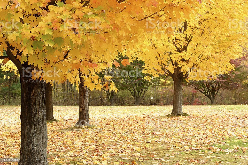 Yellow of the Fall royalty-free stock photo