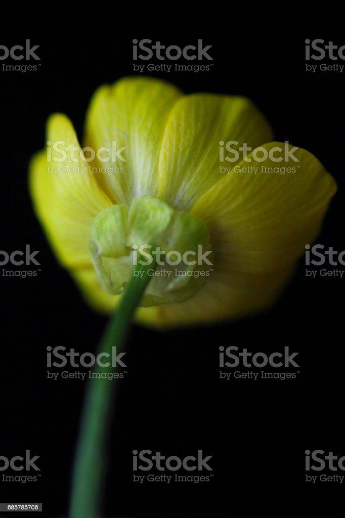 Amarillo sobre negro foto de stock libre de derechos