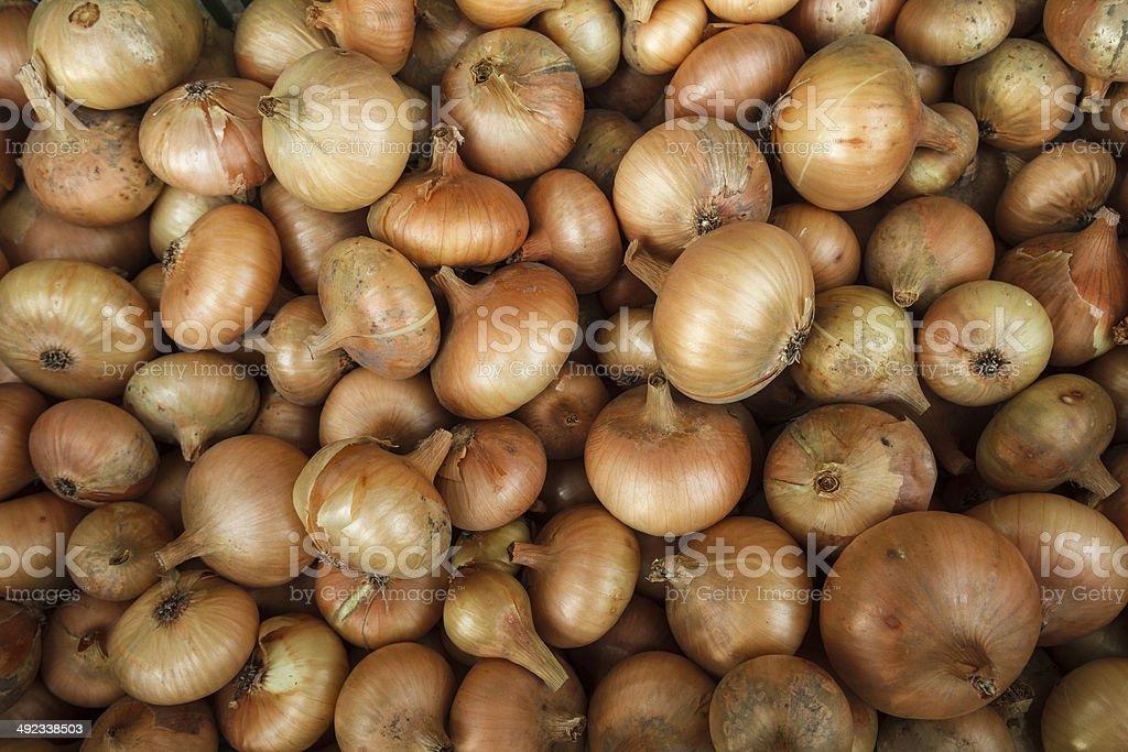 Yellow onions crop. Close up stock photo