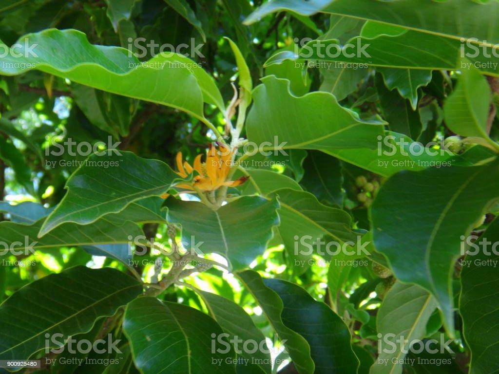Yellow or orange flower stock photo