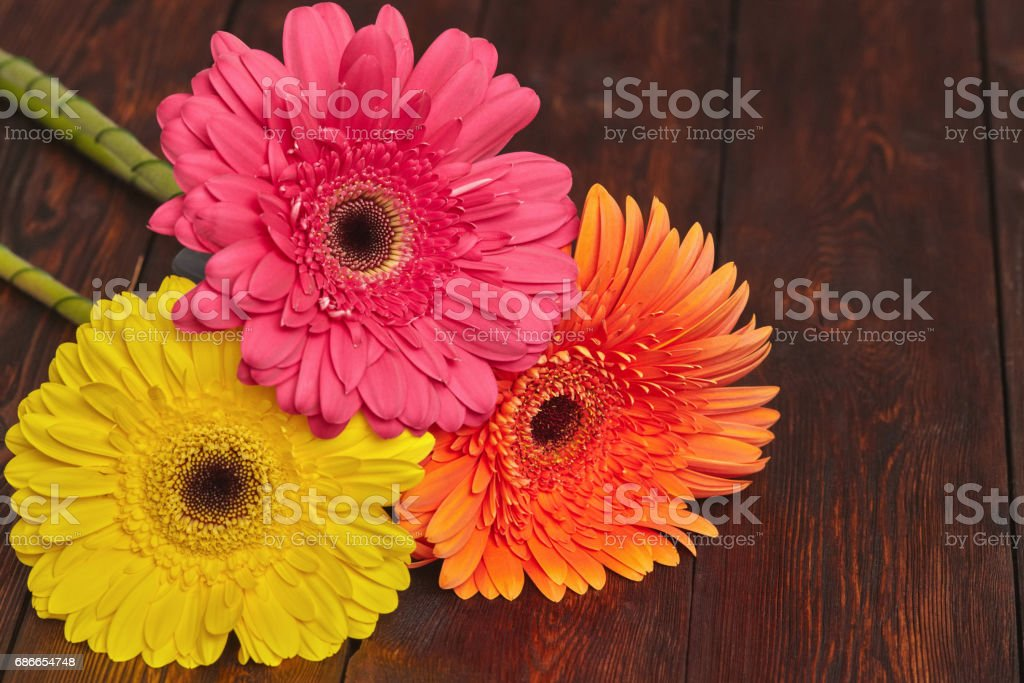 Yellow, orange and pink gerbera flowers royalty-free stock photo